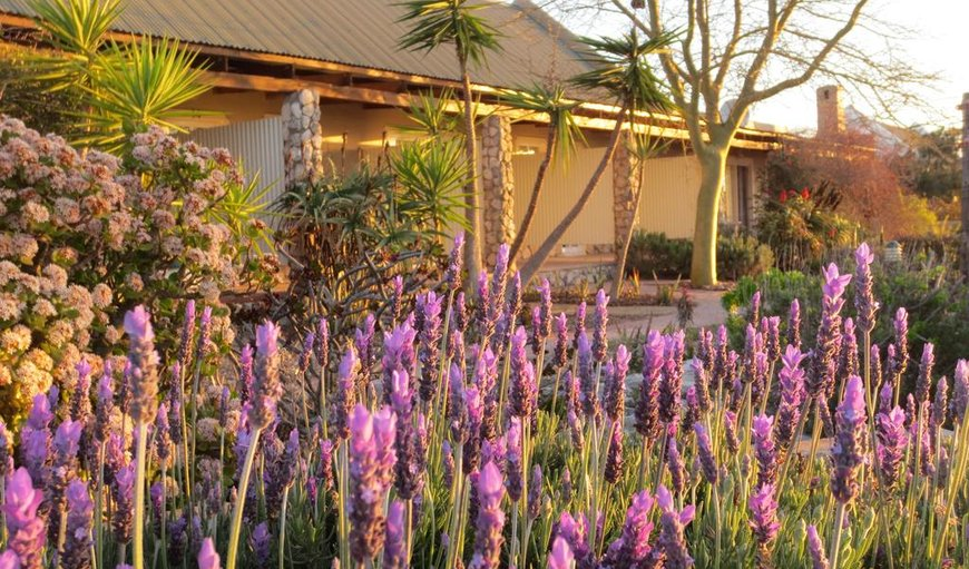 Garden in Langebaan, Western Cape , South Africa