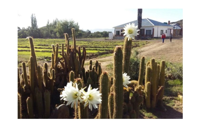 Welcome to Karoo Farm Strydomsvlei in Willowmore, Eastern Cape, South Africa