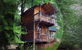 Sycamore Avenue Treehouses image