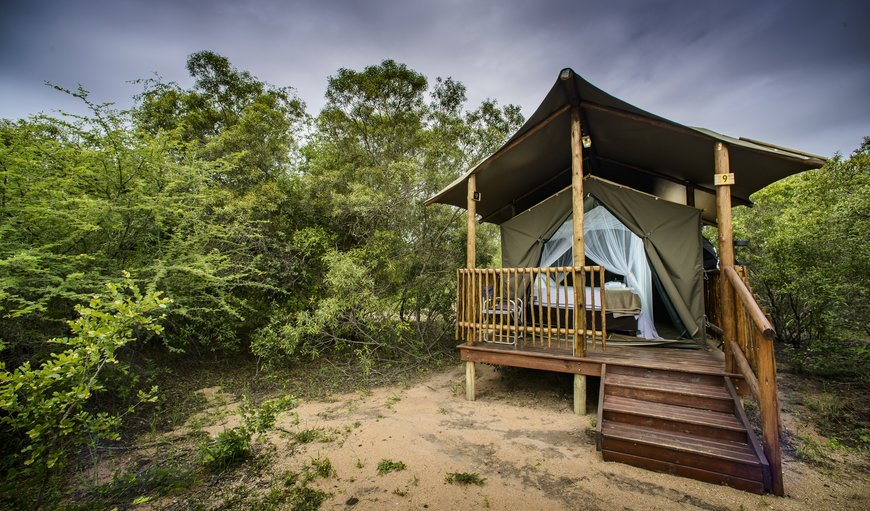 Tent in Hoedspruit, Limpopo, South Africa