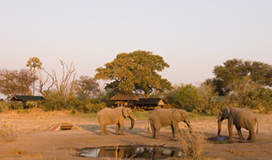 Zibalianja Camp in Selinda Reserve, North West District, Botswana