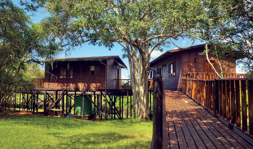 Tree Lodge in Hluhluwe, KwaZulu-Natal, South Africa