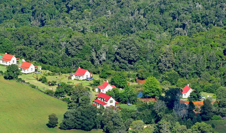 5 Private freestanding cottages - Knysna Forest (Copyright Forest Edge)