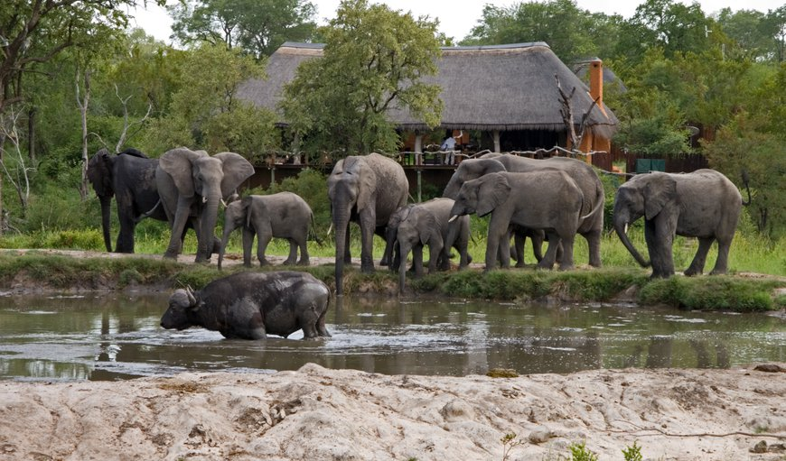 Simbambili Game Lodge in Sabi Sands Game Reserve, Mpumalanga, South Africa