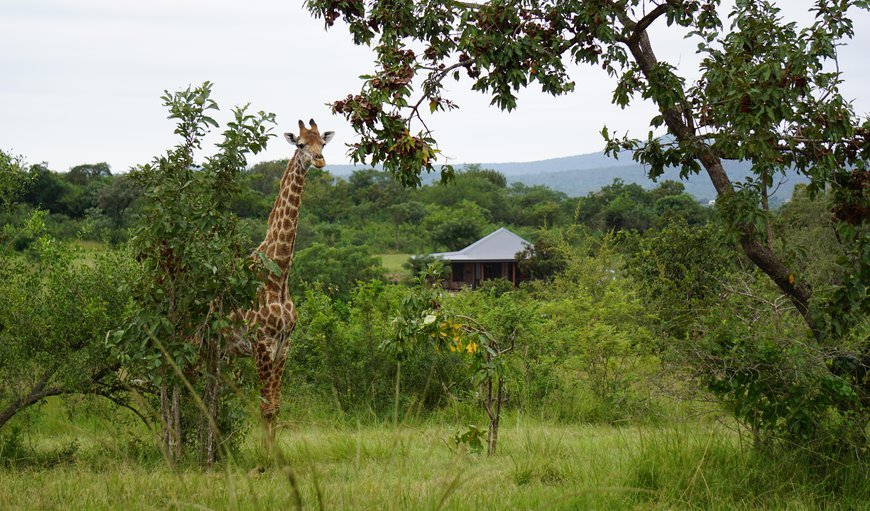 Welcome to Dombeya Game Reserve Lodge in Luve, Manzini, Eswatini (Swaziland)