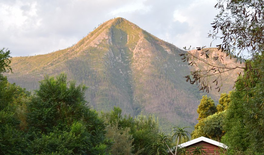 Mad About Saffron is situated in the pristine Storms River village, and at forest edge of the Tsitsikamma National Park