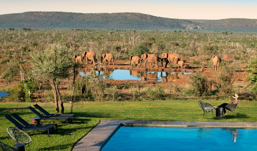 Welcome to Madikwe Safari Lodge in Madikwe Reserve, North West Province, South Africa