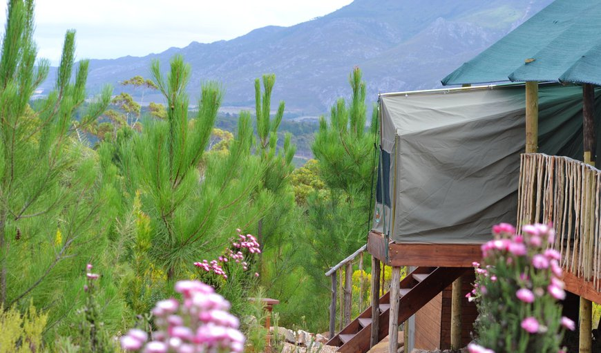 Welcome to Otium Oasis Glamping & Camping in Tesselaarsdal, Western Cape, South Africa
