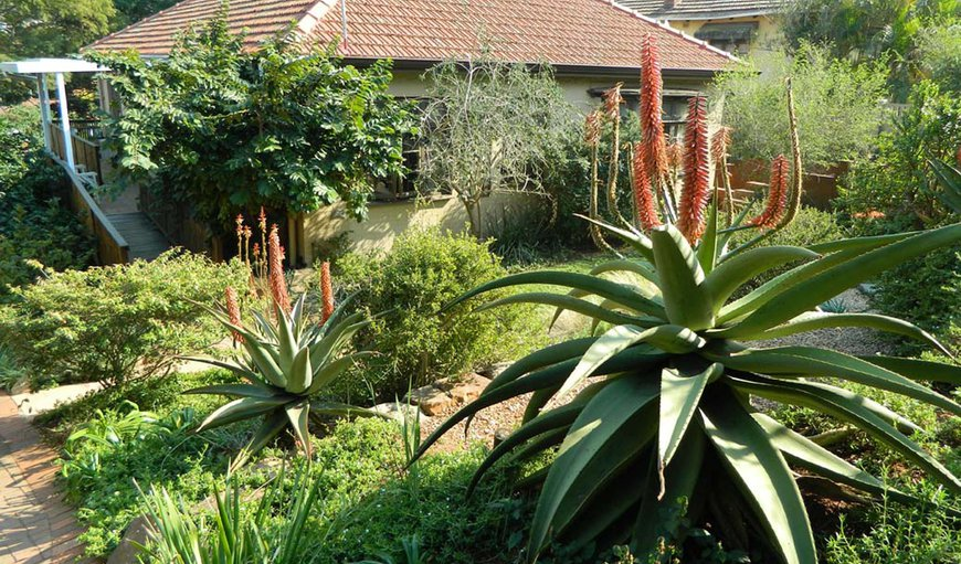 Mackaya Bella Guest House in Glenwood, Durban, KwaZulu-Natal , South Africa