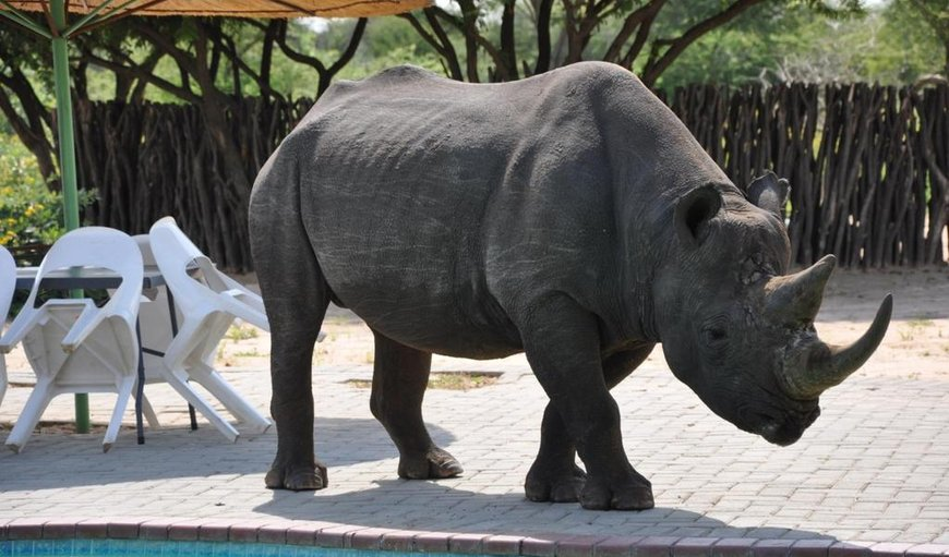 Welcome to Khama Rhino Sanctuary in Serowe, Central District , Botswana