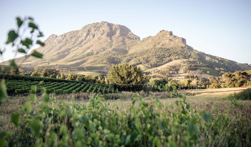 Welcome to Le Pommier Wine Estate in Stellenbosch, Western Cape, South Africa