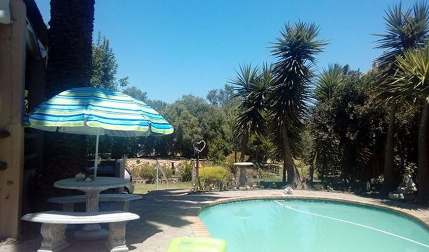 Swimming pool to cool off or relax next to on a hot Day in Calitzdorp, Western Cape , South Africa
