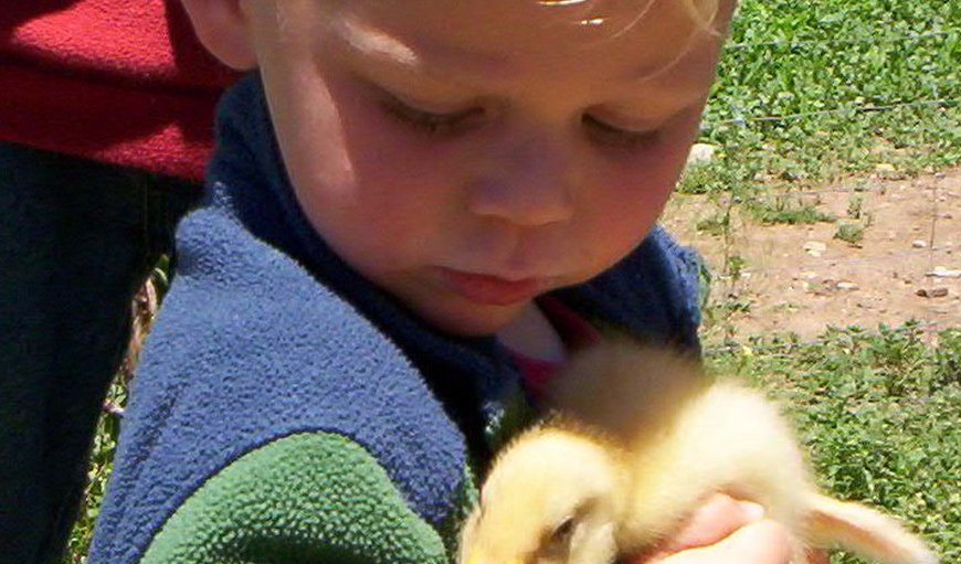 Our own children will assist visitors to explore and enjoy our farm