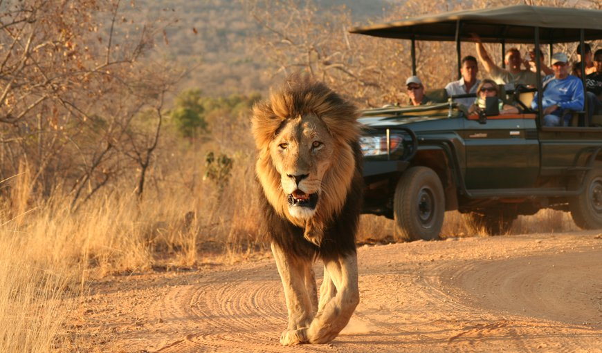 Welcome To Makweti Safari Lodge in Welgevonden Game Reserve, Limpopo, South Africa