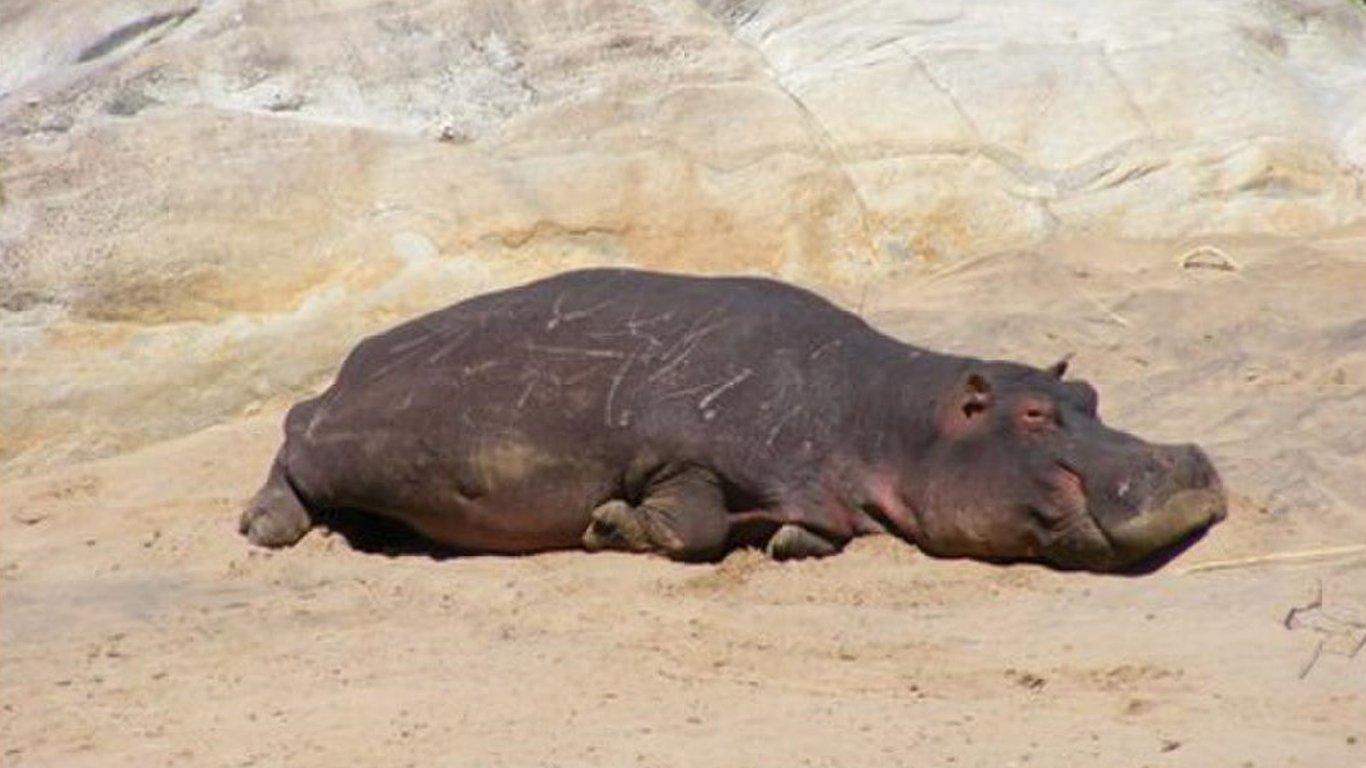 Hippo Pools Resort In Hoedspruit Best Price Guaranteed - Hippopotamus pool table
