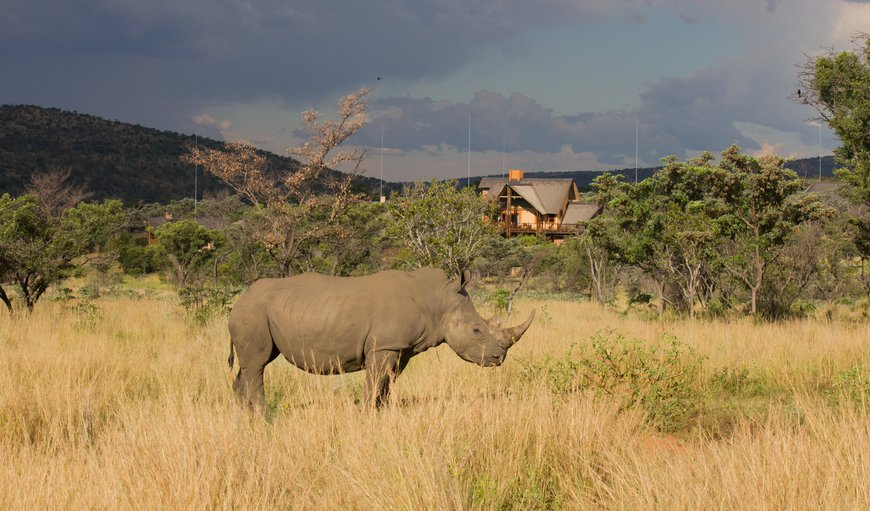 Kololo Game Reserve in Vaalwater, Limpopo, South Africa